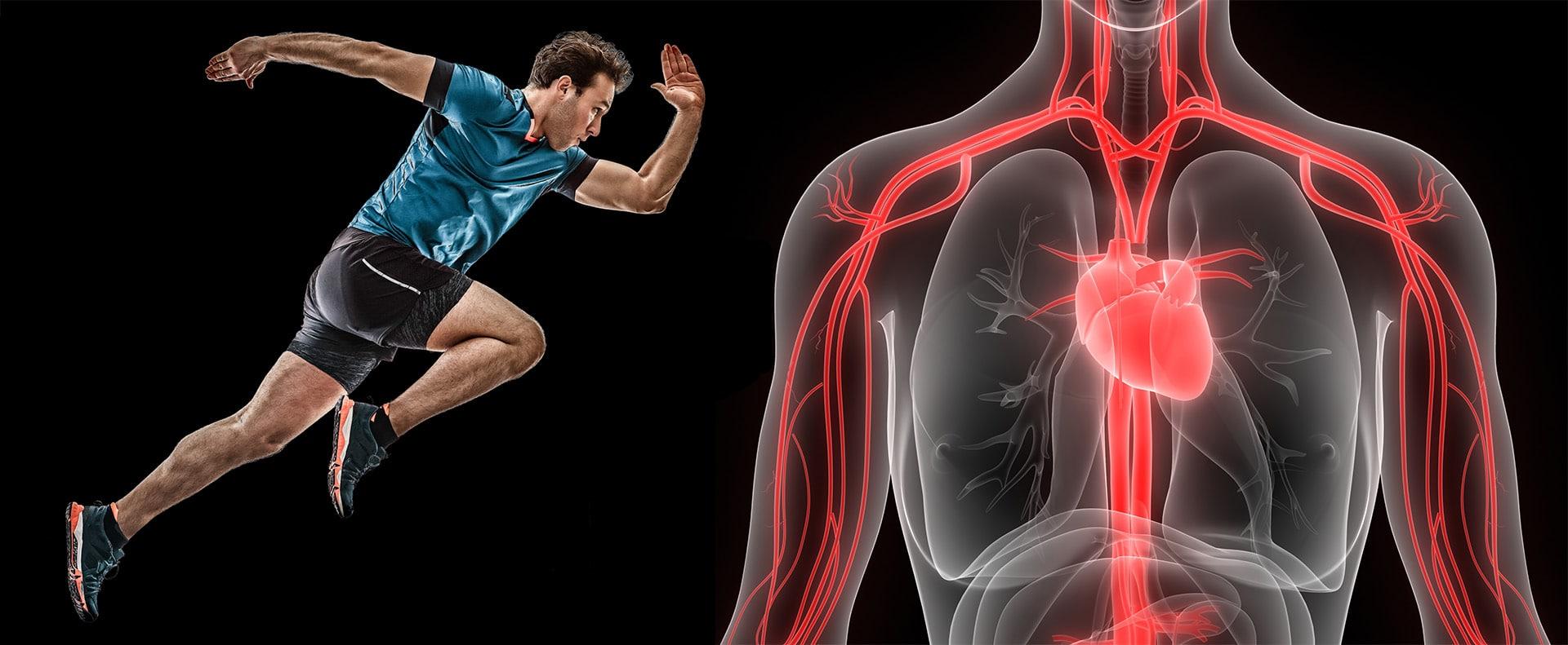 Salus blog - benefici attività sportiva sulla circolazione
